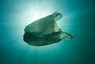 消灭塑料的好方法就是吃了它
